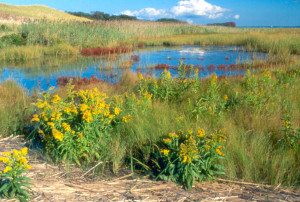 National-Model-webpage_SandyNeckBarnsBarrierBeachWetland2