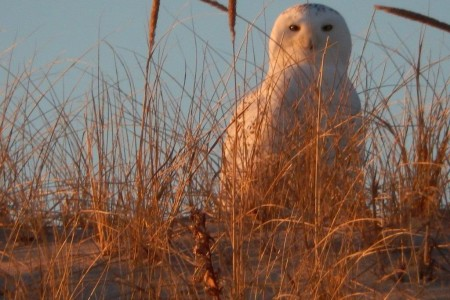 Cape Cod Wildlife Conservation Project